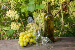 Two empty wine glasses and a bunch of grapes on old wooden table royalty free stock images