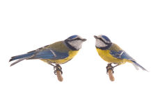 Two Eurasian Blue Tit Royalty Free Stock Image