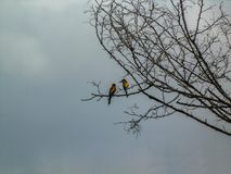 Two european bee-eater sitting on a tree branch. stock images