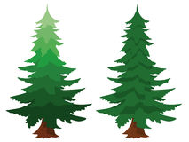Two evergreen fir trees. Illustration of two evergreen fir trees, one with a gradient colour, isolated on white conceptual of forests, forestry, timber, nature Stock Image