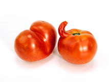 Two exceptional tomatoes Stock Image