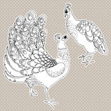 Two exotic birds  on white Royalty Free Stock Images