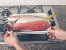 Two exotic fish on a stove Royalty Free Stock Image