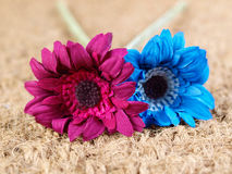 Two fabric flowers of different colors Stock Images
