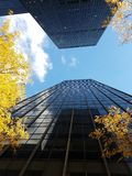 Two facing skyscrapers, angle view, yellow trees, midtown NYC royalty free stock photography