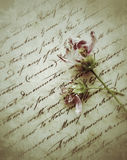 Two fading flowers on old script writing Stock Image