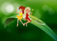 Two fairies sitting on an elongated leaf. Illustration of the two fairies sitting on an elongated leaf Stock Images