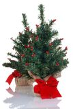 Two fake mini christmas trees Stock Image