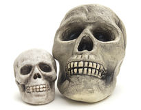 Two fake skulls on white background Royalty Free Stock Images