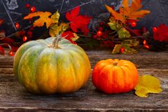 Fall harvest of pumpkins Stock Images