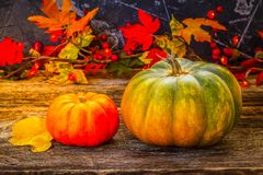 Fall harvest of pumpkins. Two fall pumpkins with leaves on wooden table, retro toned Stock Images