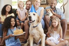 Two families celebrating pet dog�s birthday at home stock photos