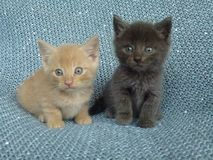 Two farm kittens royalty free stock images