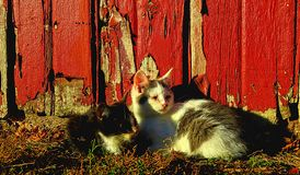 Two farm kittens waking up royalty free stock photography