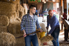 Two farm workers feeding horses Stock Photo