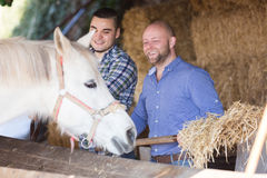 Two farm workers feeding horses Royalty Free Stock Photos