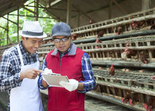 Two farmer chicken Royalty Free Stock Images