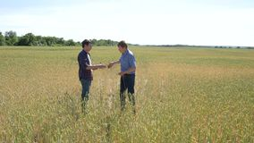 Two farmer standing in a wheat field. They are examining corp at sunset stock video footage