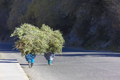 Two farmer women carrying a load of branches. Royalty Free Stock Photography