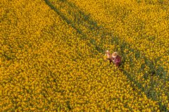 Two farmers with drone remote controller in rapeseed field using innovative technology. Aerial view of two farmers with drone remote controller in blooming