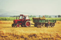 Two farmers loading hay. In a tractor wagon Stock Photography