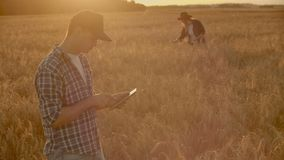 Two farmers, a man and a woman, are looking forward to the sunset over a field of wheat. Teamwork in agribusiness. Two farmers, a man and a woman, are looking stock footage