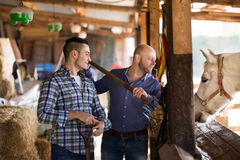 Two farmers with pitchforks Royalty Free Stock Photos