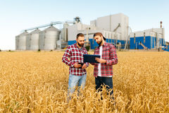 Two farmers stand in a wheat field with tablet. Agronomists discuss harvest and crops among ears of wheat with grain. Two farmers are standing in a wheat field Royalty Free Stock Photo
