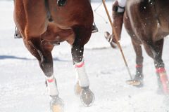 Two Fast horses in the race. Two Horses to a competition of winter pole Stock Image