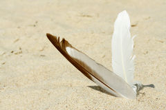 Two feather in the sand Stock Images
