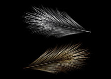 Two feather. Royalty Free Stock Photos