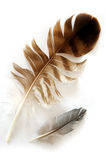 Two feathers Stock Photos