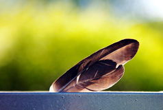 Two feathers. On a green background Royalty Free Stock Photos