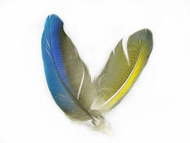 Two feathers Royalty Free Stock Photo