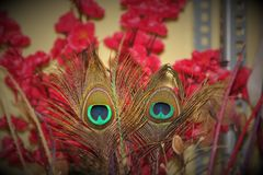 Two Feathers. Bay Decoration Culture Stock Image