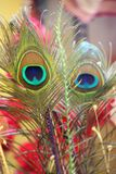 Two Feathers. Bay Decoration Culture Royalty Free Stock Image