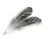 Two feathers isolated Stock Images