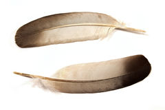 Two feathers Royalty Free Stock Photos