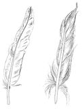 Two feathers sketches isolated on white Royalty Free Stock Photography