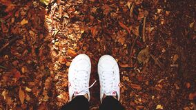 Two Feet in White Nike Sneakers Standing on Dry Leaves Stock Image