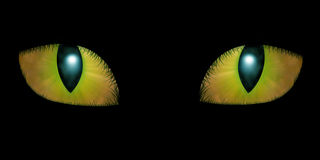 Two feline eyes Stock Photography