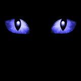 Two feline eyes Stock Images