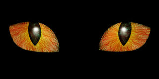 Two feline eyes Stock Photos