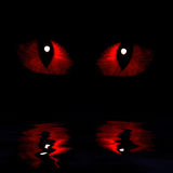 Two feline eyes. Reflected in water on a dark background Stock Image