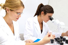 Two Femal Scientists Working Together Royalty Free Stock Photos