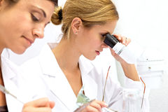 Two Femal Scientists Working Together Stock Photos