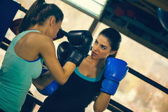 Two Female Boxers At Training Stock Image