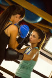 Two Female Boxers At Training Stock Photo