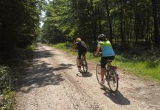 Two female cyclists. On a forest road royalty free stock images