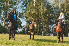 Two female equestrians with purebred brown horses and foal between them. Two female equestrians with purebred brown horses and foal between them Royalty Free Stock Photos